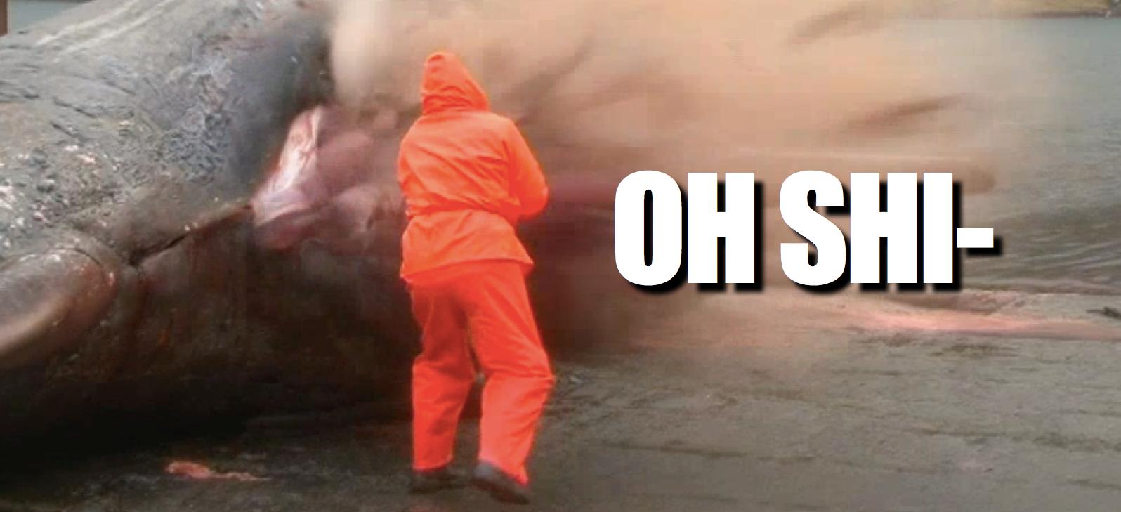 Faszination und Ekel: Ein explodierender Wal