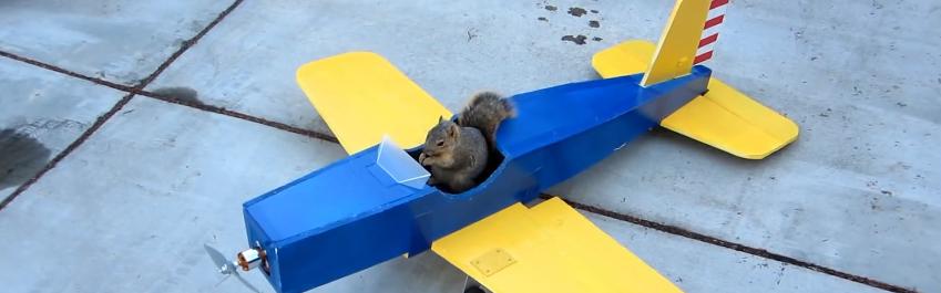 Eichhörnchen entführt Flugzeug