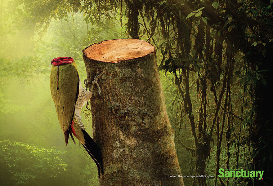 animal-rights-social-ads-call-of-the-wild-sanctuary-asia-1
