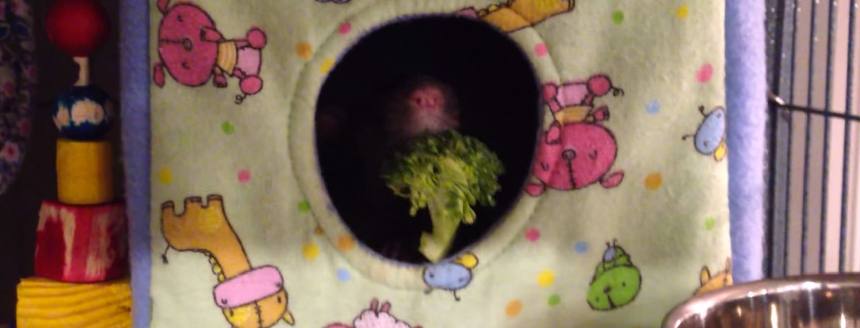 brokkoli