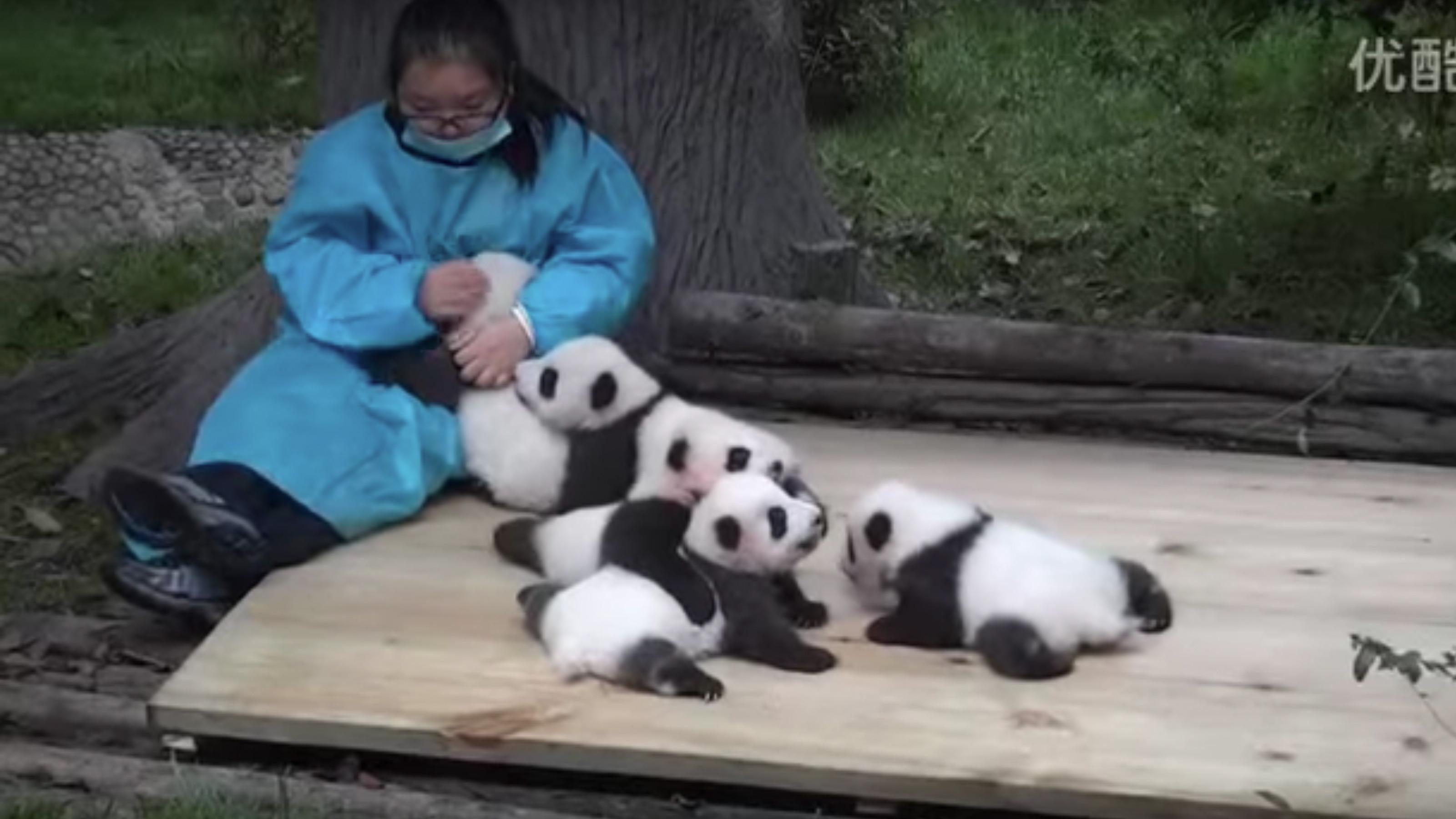 """""""Und was machst du so?"""" – """"Ach, irgendwas mit Pandas"""""""