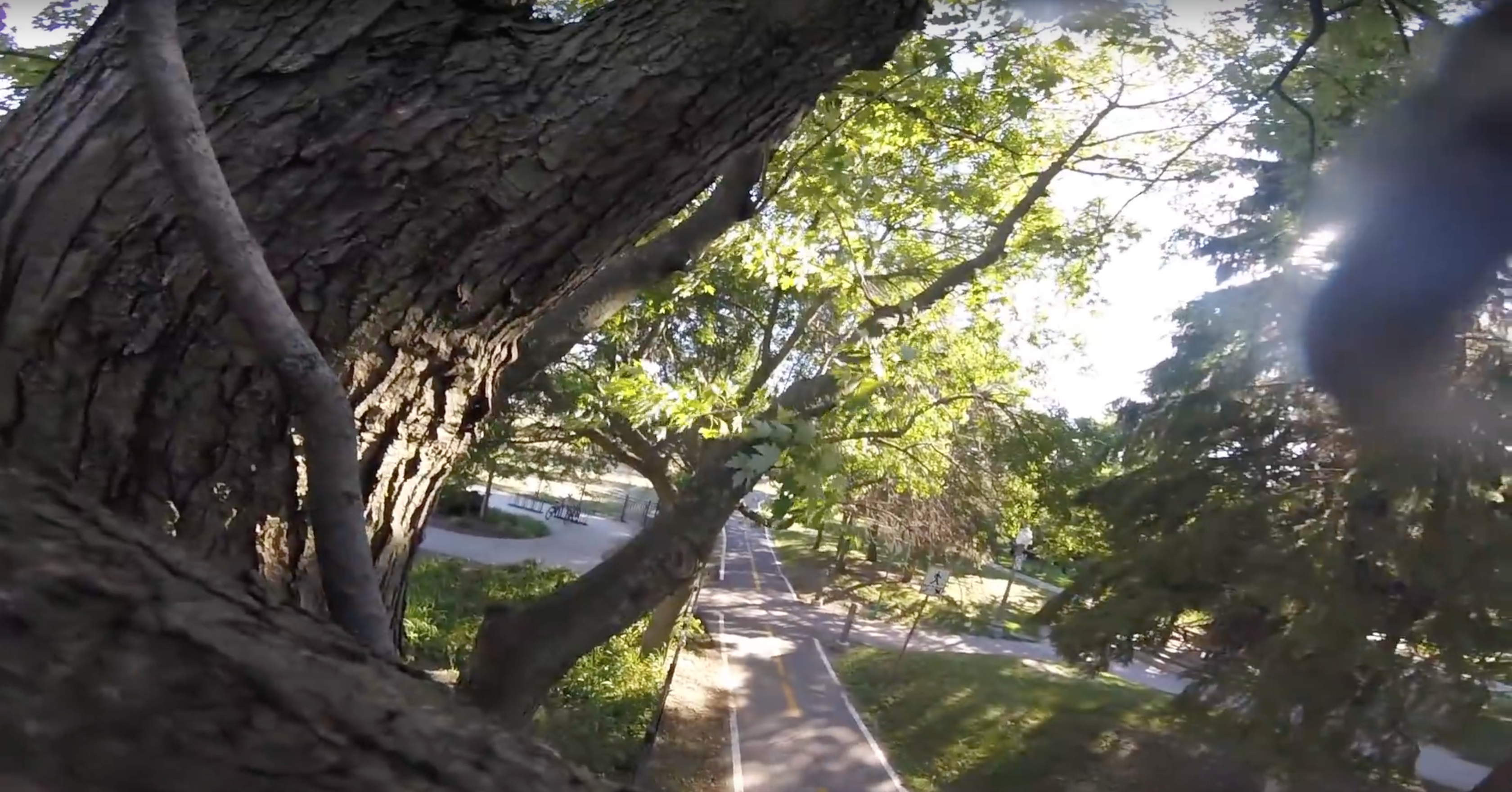 Squirrel take GoPro and gives best POV EVER!!!